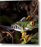 Colorful Red Eyed Tree Frog Metal Print