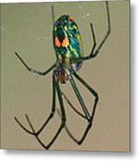 Colorful Spider In The Swamp Metal Print
