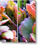 Colorful Succulents In Stereo Metal Print