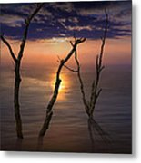 Colorful Sunset Seascape With Tree Trunks Metal Print