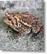 Colorful Toady Metal Print