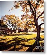 Colorful Trees Of Long Beach In The Autumn Metal Print