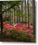 Colorful Woodland Azalea Garden Metal Print