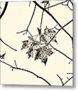 Colorless Autumn Metal Print