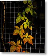 Colors Change Metal Print