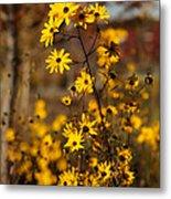 Colors Of Autumn Metal Print by Sabrina L Ryan