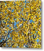 Colors Of Autumn - Yellow - Featured 3 Metal Print