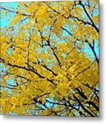 Colors Of Fall 1 Metal Print