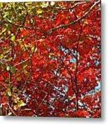 Colors Of Fall 3 Metal Print