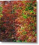 Colors Of Fall 4 Metal Print