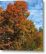 Colors Of Fall 4 Metal Print