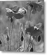 Colour Blind Poppies 1 Metal Print