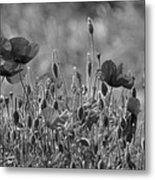 Colour Blind Poppies 2 Metal Print