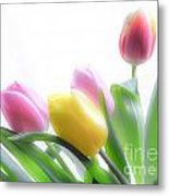 Colourful Tulips That Are Digitally Softened Metal Print