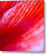 Colours Of A Lily Metal Print by Kim Lagerhem