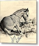 Colt Laying In Grass Metal Print