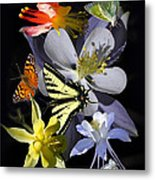 Columbine And Butterfly Collage Metal Print