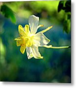 Columbine Flower Metal Print