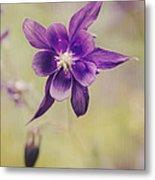 Columbine Flower Metal Print