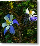 Columbine Flowers And Pine Tree Metal Print