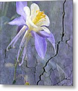 Columbine On Cracked Wall Metal Print by James Steele