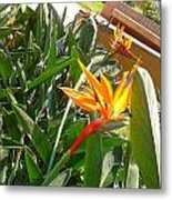 Combination Of Yellow-orange And Red Flower   Metal Print