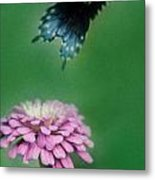 Come Fly Away Metal Print