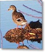 Comedian Duck Metal Print