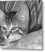 Comfy Kitten Metal Print