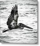 Coming In For A Smooth Landing Metal Print