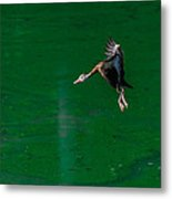 Coming In For The Landing Metal Print