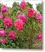 Coming Up Rosy Metal Print