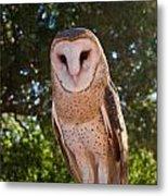 Common Barn Owl 1 Metal Print