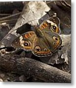 Common Buckeye Metal Print