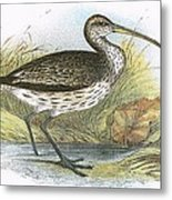 Common Curlew Metal Print