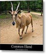 Common Eland Metal Print by Chris Flees