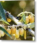 Common Grasshopper Metal Print