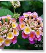 Common Lantana Flower Metal Print