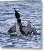 Common Loon 69 Metal Print