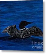 Common Loon Preening Metal Print
