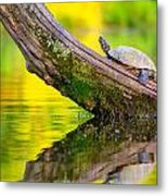 Common Map Turtle Metal Print