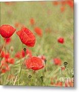 Common Poppies Metal Print