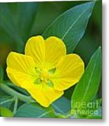 Common Primrose Willow 1 Metal Print