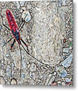 Common Red Bug Along The Seti River Road-nepal  Metal Print