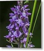 Common Spotted Orchid Metal Print
