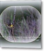 Common Yellowthroat - Bird Metal Print