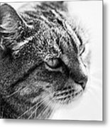 Concentrating Cat Metal Print