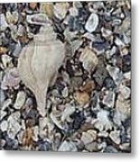 Conch Among A Sea Of Shells Metal Print