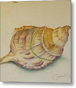 Conch Shell Metal Print by Debbie Nester