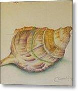 Conch Shell Metal Print